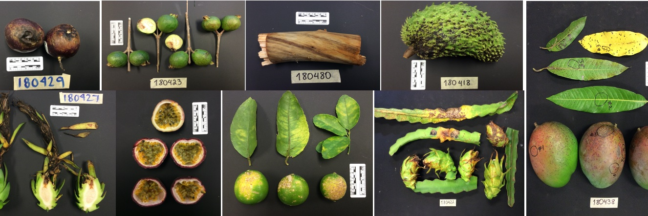 🍄🥑🤓 Postdoctoral Researcher (2) and Visiting Scientist Positions Available – University of Florida Tropical Researc… https://t.co/kSLS9x1Qyc