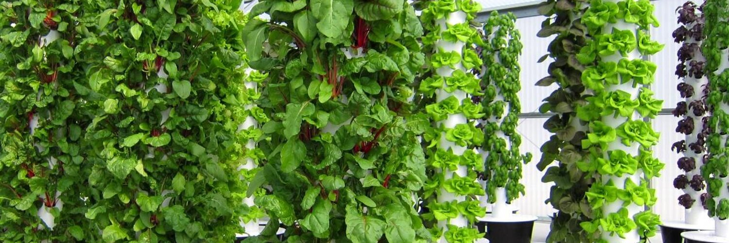 """Tim Blank LLC on Twitter: """"Future Growing's technology is helping restaurants have healthier produce while saving money through freshness.... http://t.co/A6ouMp6gNQ"""""""