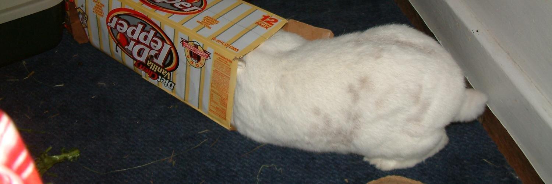 rabbitcams com