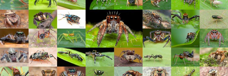 Consulting (environment, entomology) B.S. Biology M.S. Aquatic biology - Ret. Ohio EPA, Jazz, comedy, no business/ads, Follow = Follow & tweet = tweet