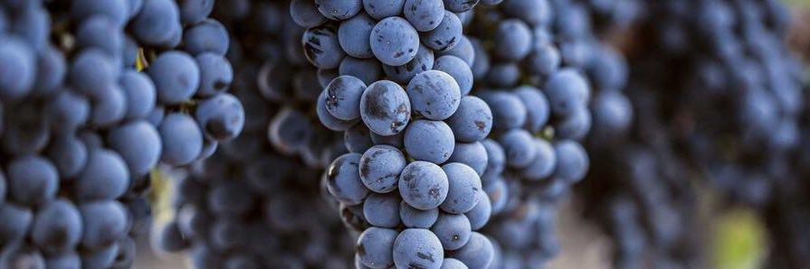 Excelente recurso de Bodegas @maset del #Penedès. Un curso vinícola en YouTube sobre el proceso de elaboración del… https://t.co/256iqh1N93
