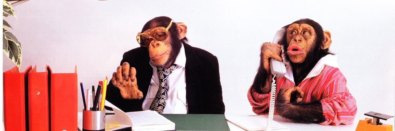 сжатом прикольная картинка обезьяна в офисе маленький