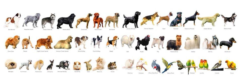 Картинки для года собаки сценарий