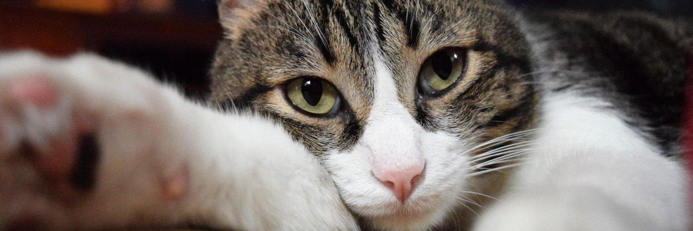 El Zucaritas se pone más intenso :v twitter.com/Owl__Kitty/sta…