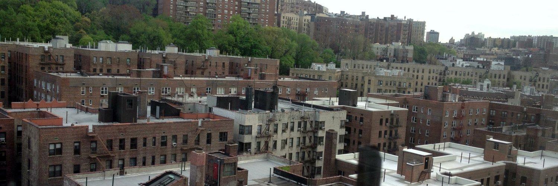 Birding in Upper Manhattan