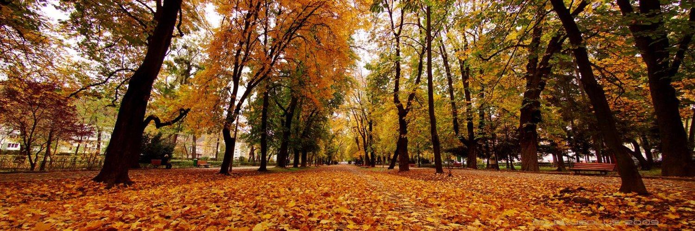 номер панорамная картинка осень днях выяснилось
