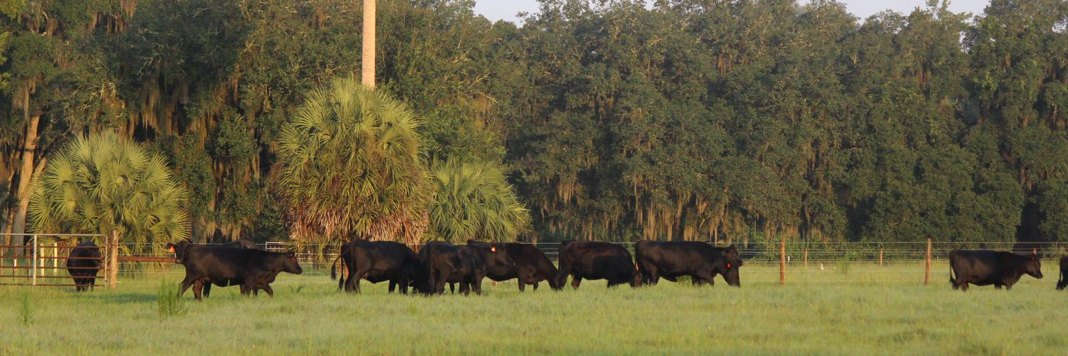 Dr. Cindy Sanders, UF/IFAS Alachua County Extension Director/Livestock Agent