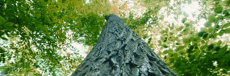 Hauptverband der Deutschen Holzindustrie