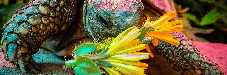 US: Organizations combine for oil leak workshop at zoo - Brownsville Herald tortoise.link/2o42XRu #seaturtle #news