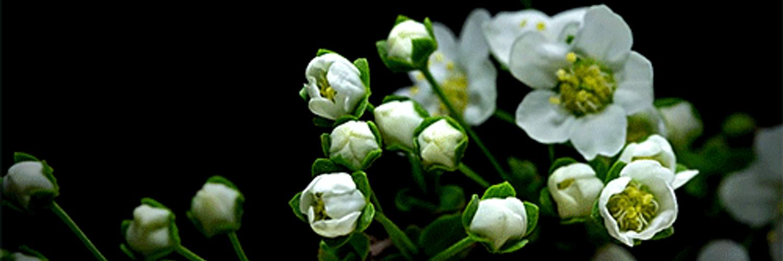Живые открытки распускающиеся цветы