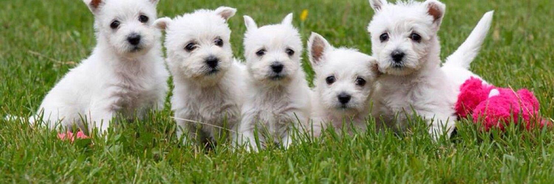 Animatch Dog Adoption Montreal