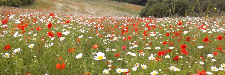 Ecology & sustainability adviser: land & more. Columnist (Conservation News) in British Wildlife. Community volunteer, pottering cyclist. W: meadowmaker.uk