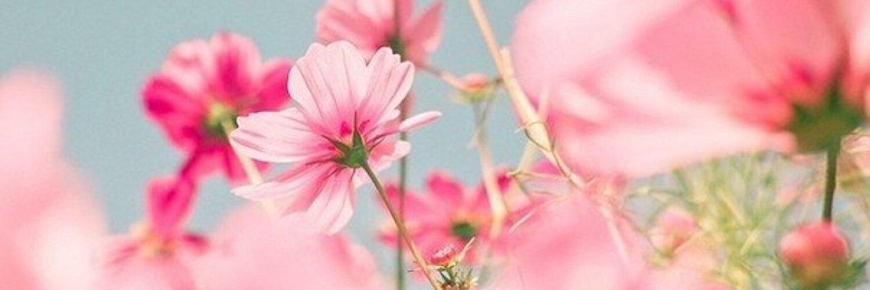 зловонной картинки для фейсбука на обложку цветы или