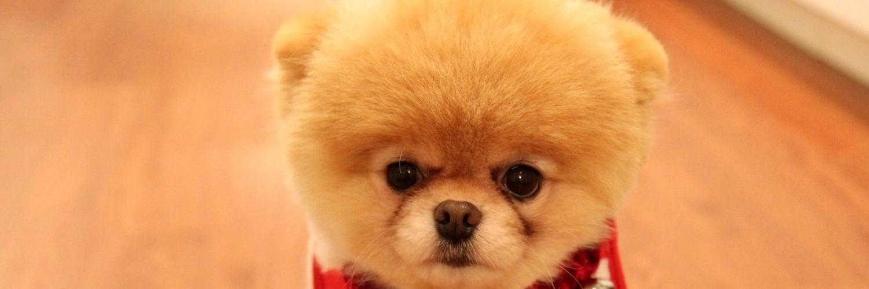 Картинка собаки ивангая кума