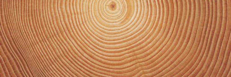 Bundesverband Säge- und Holzindustrie Deutschland
