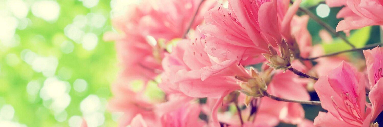 картинки для фейсбука на обложку цветы цинна