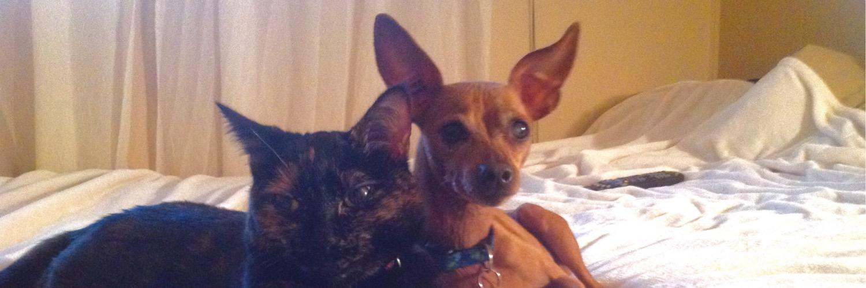 Type 1 Diabetic Doggo, a Good Girl 👼🏼, Xena Warrior Princess Tortie
