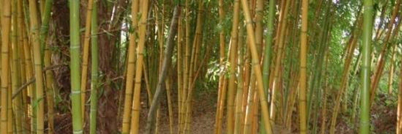 Bamboo Teeth (@bambooteeth) on Twitter banner 2014-07-14 13:04:12