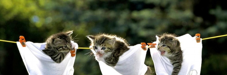 Animaux dr les animaux droles twitter - Videos droles d animaux ...
