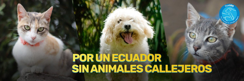 Lorena Hurtado (@LorenaMHurtado) on Twitter banner 2014-12-05 11:42:54