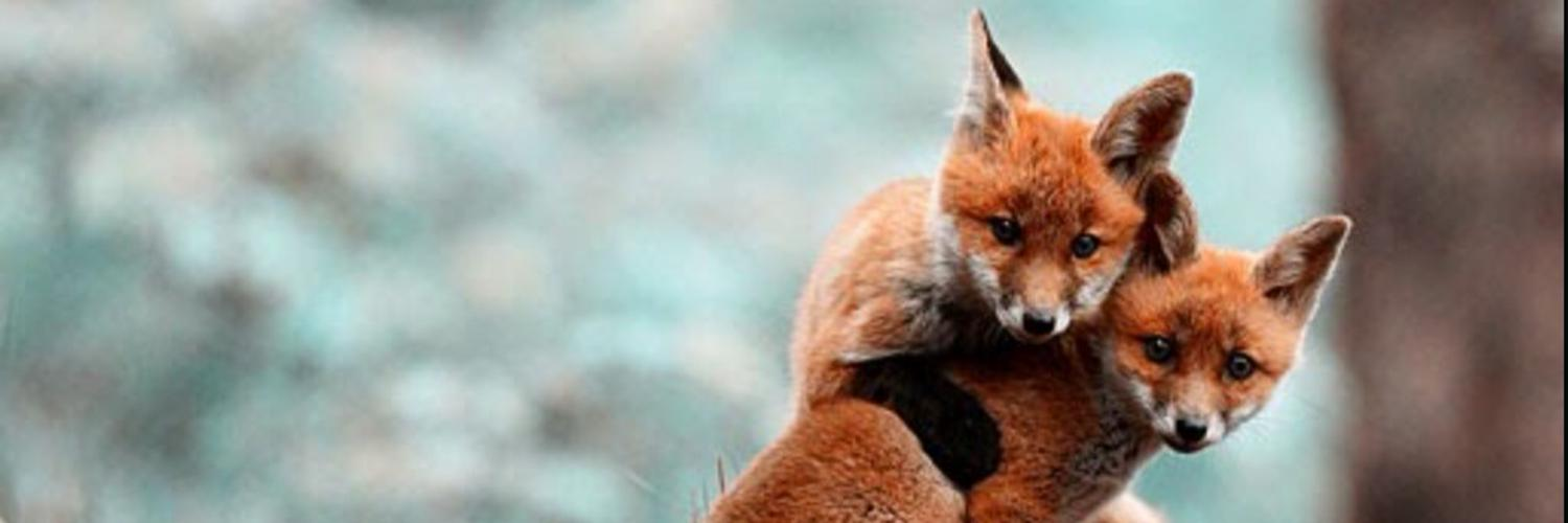 Derby Hunt Saboteurs campaign against all bloodsports and directly intervene to protect wildlife from persecution in the East Midlands and further afield.