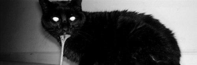 Картинки рвота у кошки