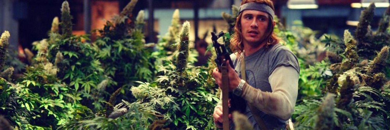 Комедии про марихуану смотреть онлайн что можно выварить из конопли