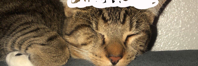 cat enthusiast