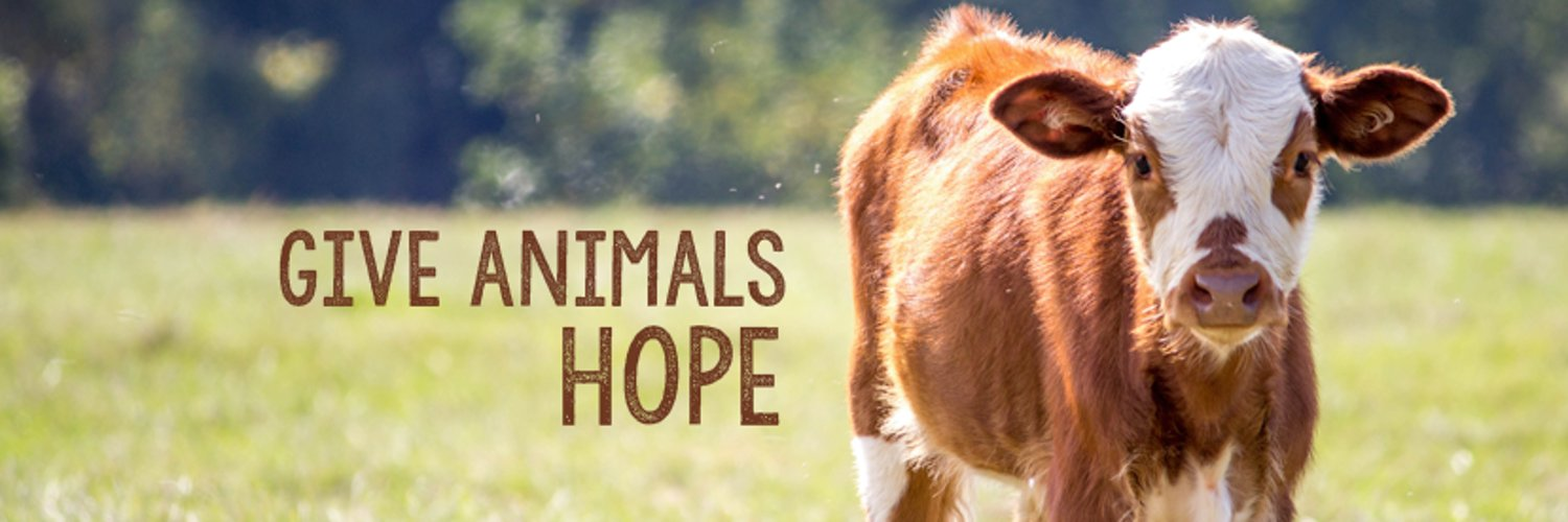 mercy animal An organization may change its practices at any time without notice a copy of this report has been shared with the organization prior to publication.