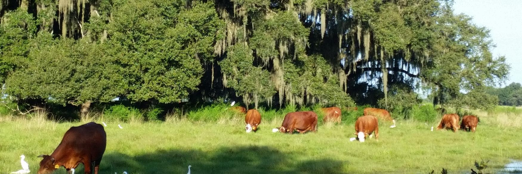 Here is another online opportunity offered by the UF/IFAS Central FL Livestock Agent. It is a three week series on… https://t.co/eltl0AvRlE