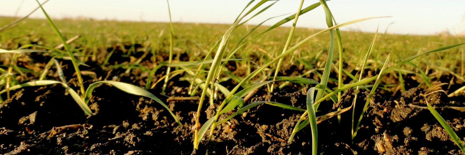 Ensalada de algoritmos para alimentar al mundo, por @DeVinoyRosas revistaagricultura.com/economia/econo… #alimentación #cultivos… https://t.co/sVmfk3Ifyu