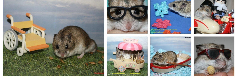Image result for hammy hamster