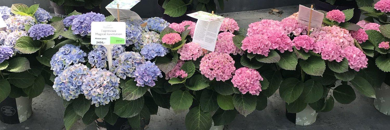 Пожелания в книгу пожеланий на день рождения растения