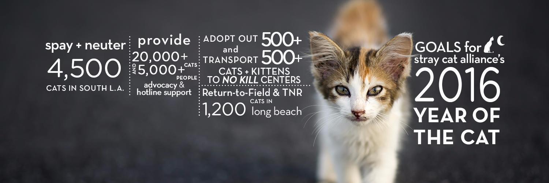 Stray Cat Alliance Rescue