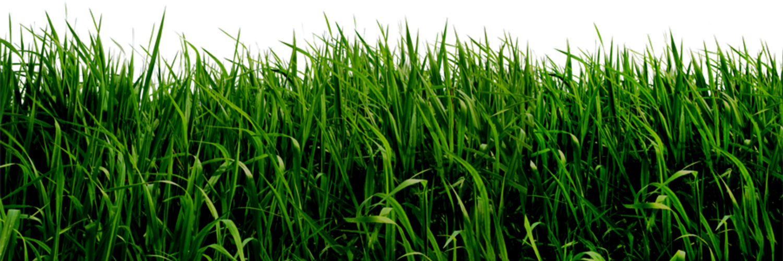 Картинка анимация трава
