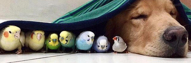 после картинки с попугаем и хомячком доме