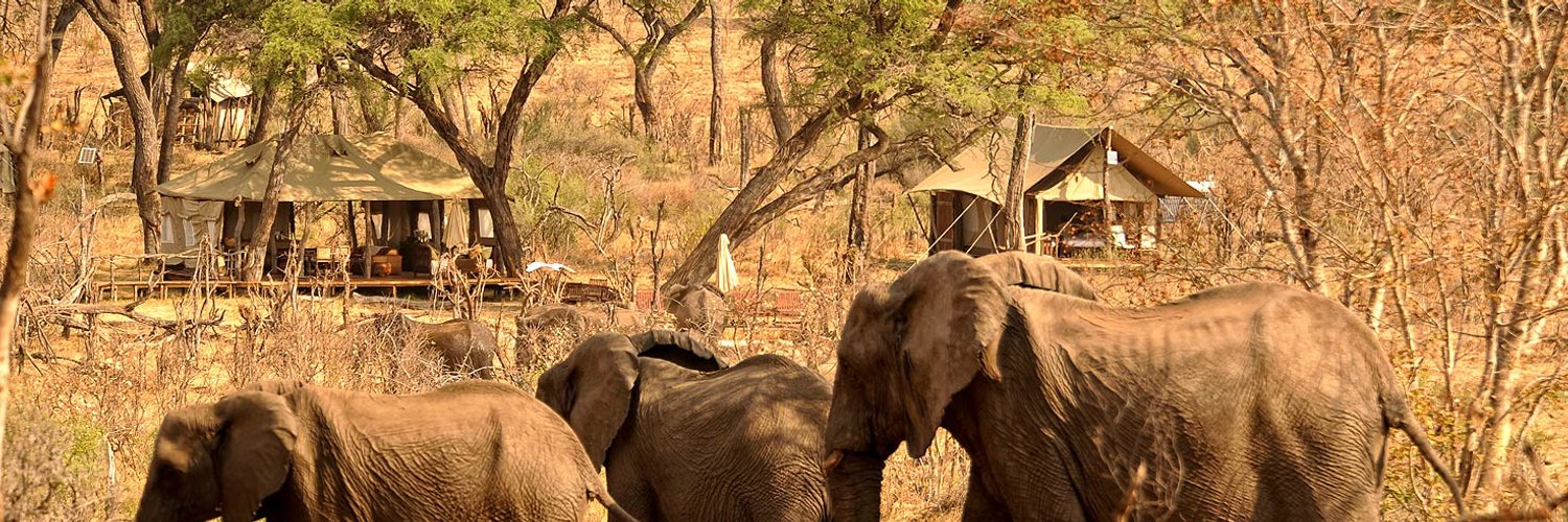 """quiver tree safaris on twitter """"fantastic to see the"""