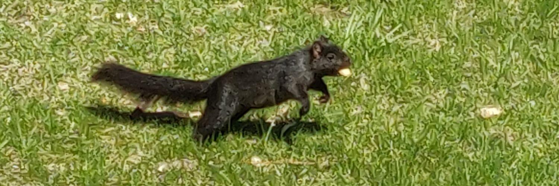 I am the mascot whisperer/私はマスコットのささやきです | Memento mori | Building a squirrel army | Robbit's Twitter Mix goo.gl/azgcwT (Google Music)