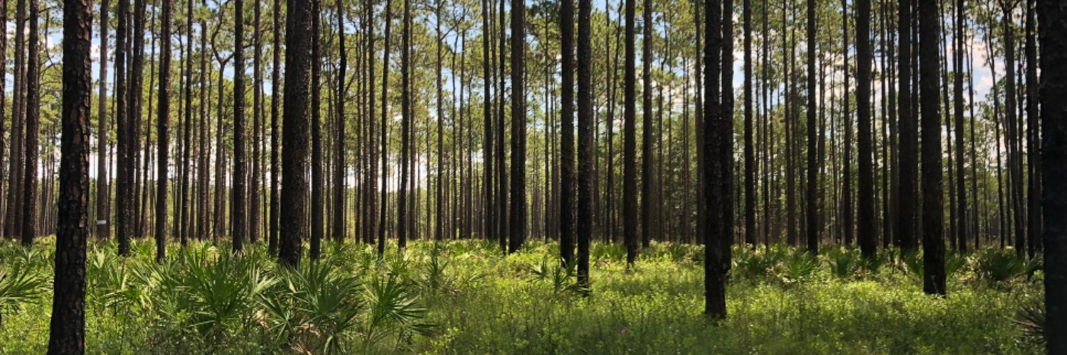 Silviculture faculty at the University of Florida @SFRC_UF and @UFIFASWFREC; Chair, @ESA_org Applied Ecology; Associate Editor, Springer's Agroforestry Systems