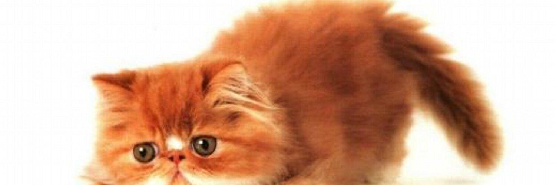 Картинки с днем рождения с рыжими котами