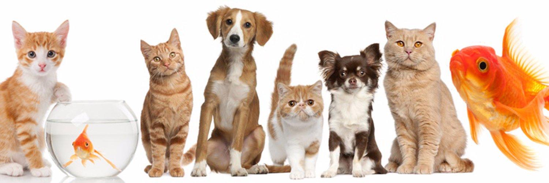 картинки кошек собак рыбок молдове есть