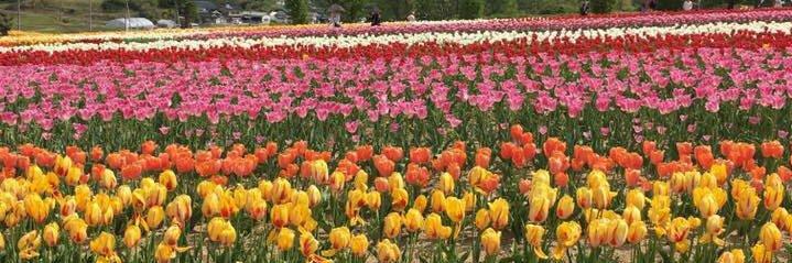 ✴️7.2木曜のご報告 ●木曜朝市前での宣伝。 朝市も通常に戻り地元の皆さんのお店も出ていて賑やか。しかしここもソーシャルディスタンスやポリ袋有料化など世の流れに乗って対応されておりました。 新鮮野菜や綺麗なお花をゲット。久しぶ… https://t.co/SAPuUiuMub