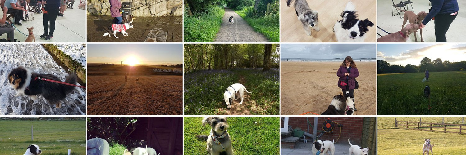 Professional & friendly dog trainer offering adult dog & puppy classes, 1-2-1 training in your home, dog walking, puppy visits and dog sitting in your home🐶