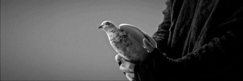 Гифы голубя, картинка днем рождения
