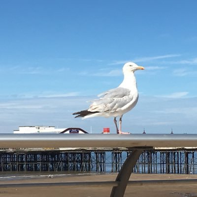scary-arsed seagull
