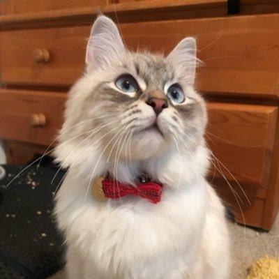 LunaBelle Cat