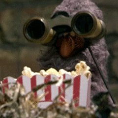 Bird Watch (@PickMePatrol) Twitter profile photo