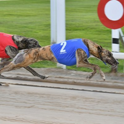 Towcester Greyhounds on Twitter: