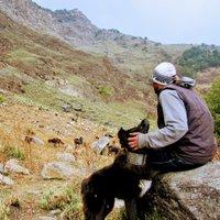 Shepherds of Himalayas