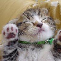超可愛い猫BOT💖
